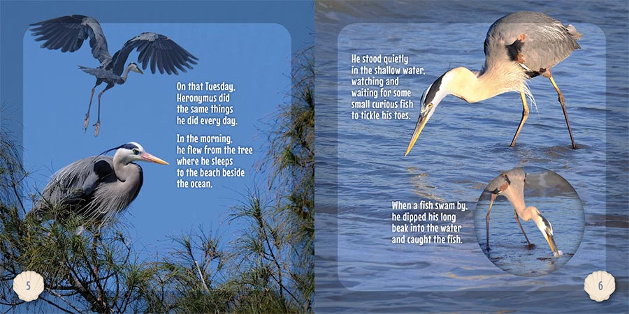 Hero the Heron Book pages 5-6