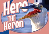 Hero the Heron