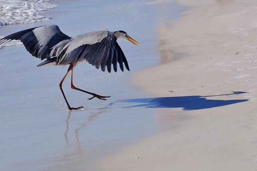 Crazy Facts About Herons